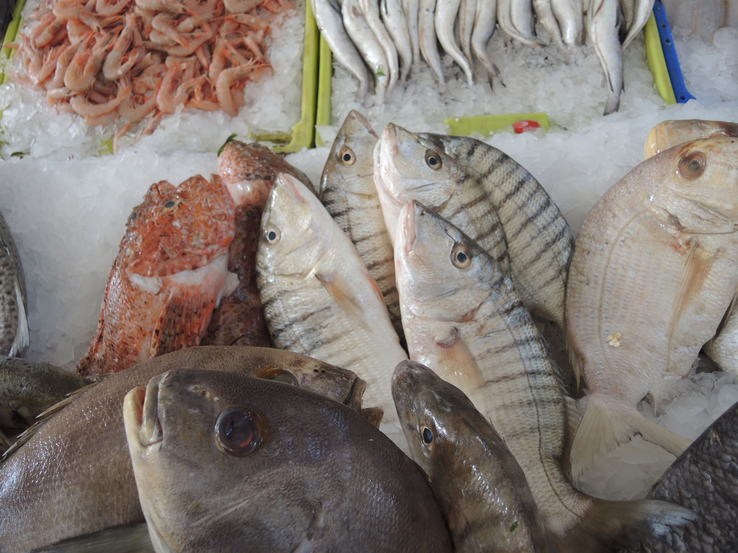 Fish in El Massira market