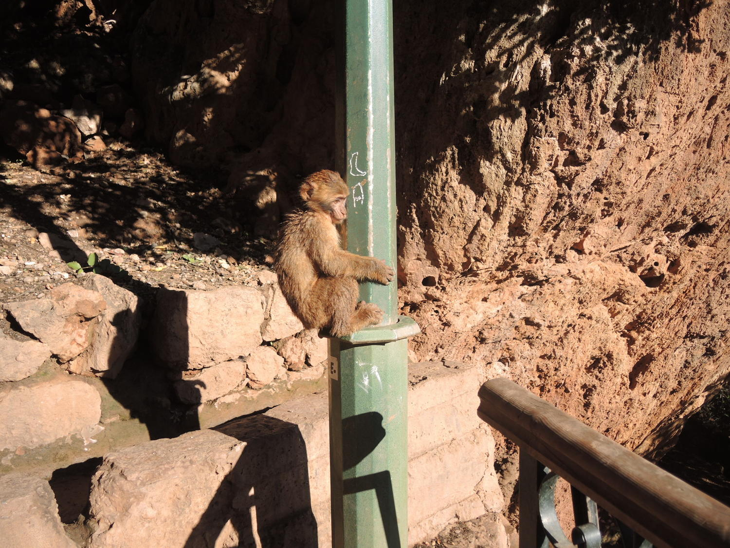 Monkeys near the Ouzoud waterfalls