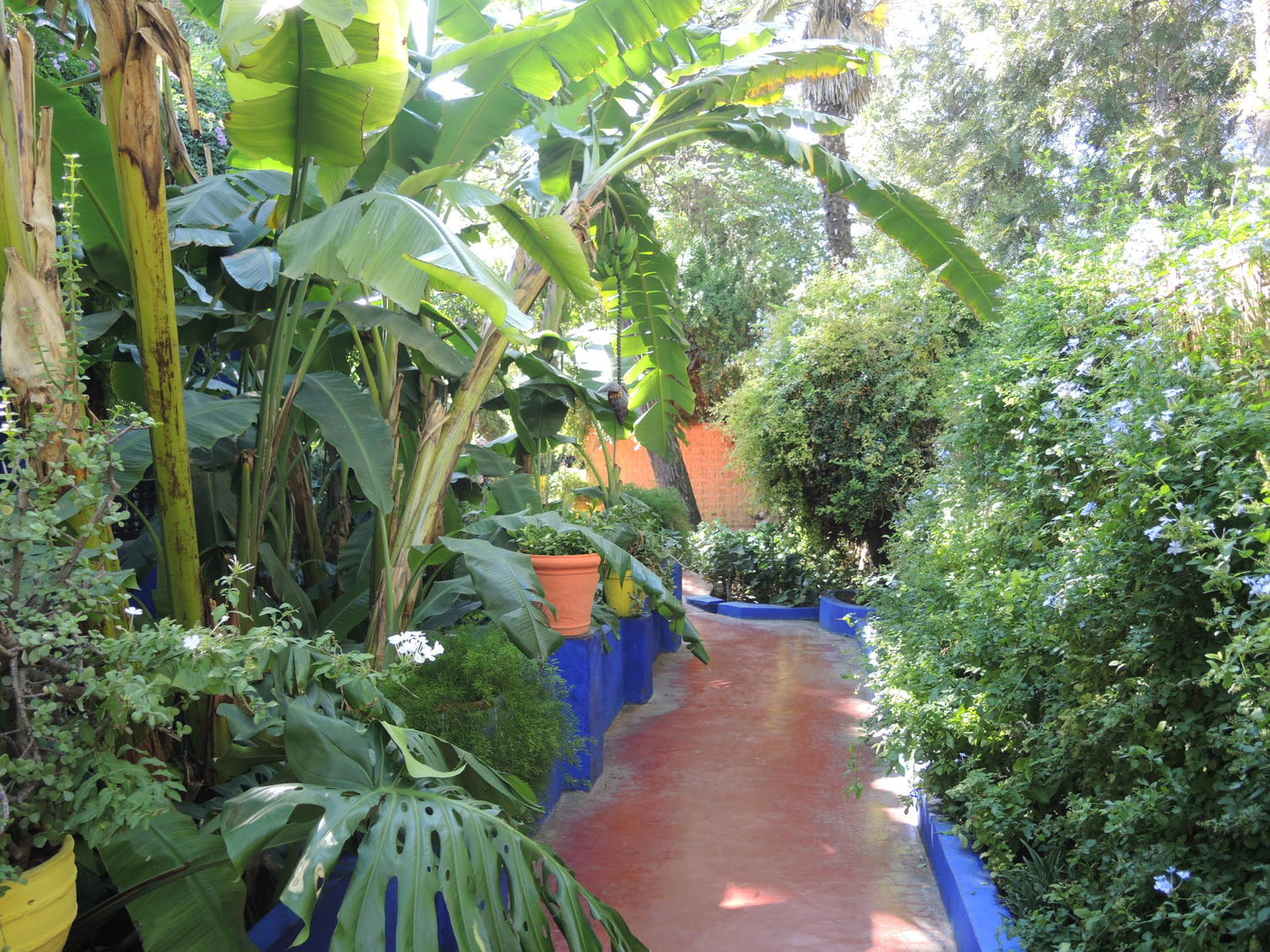 Greenery of Majorelle botanical garden in Marrakech