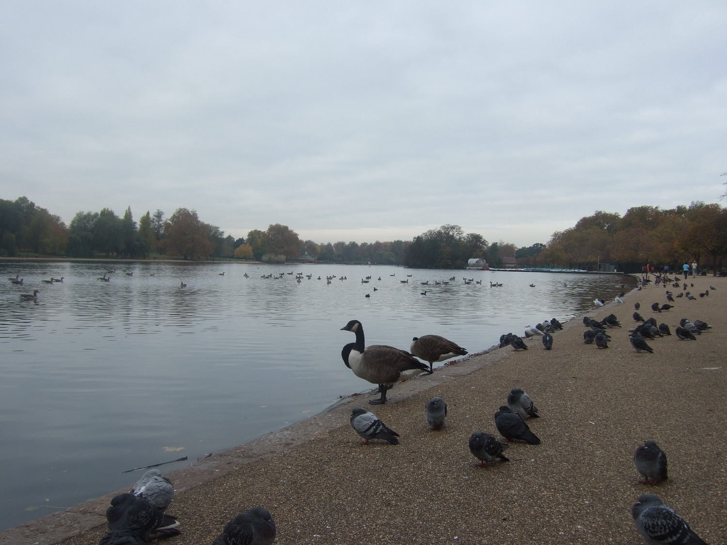 13_Ponds_of_Hyde_Park